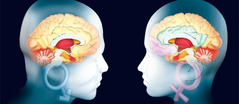 cervello-uomo-e-donna